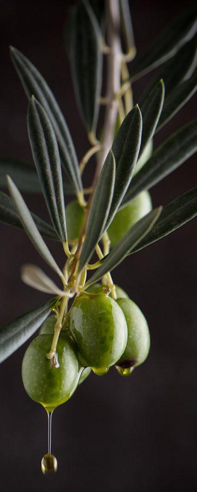 olive-bd